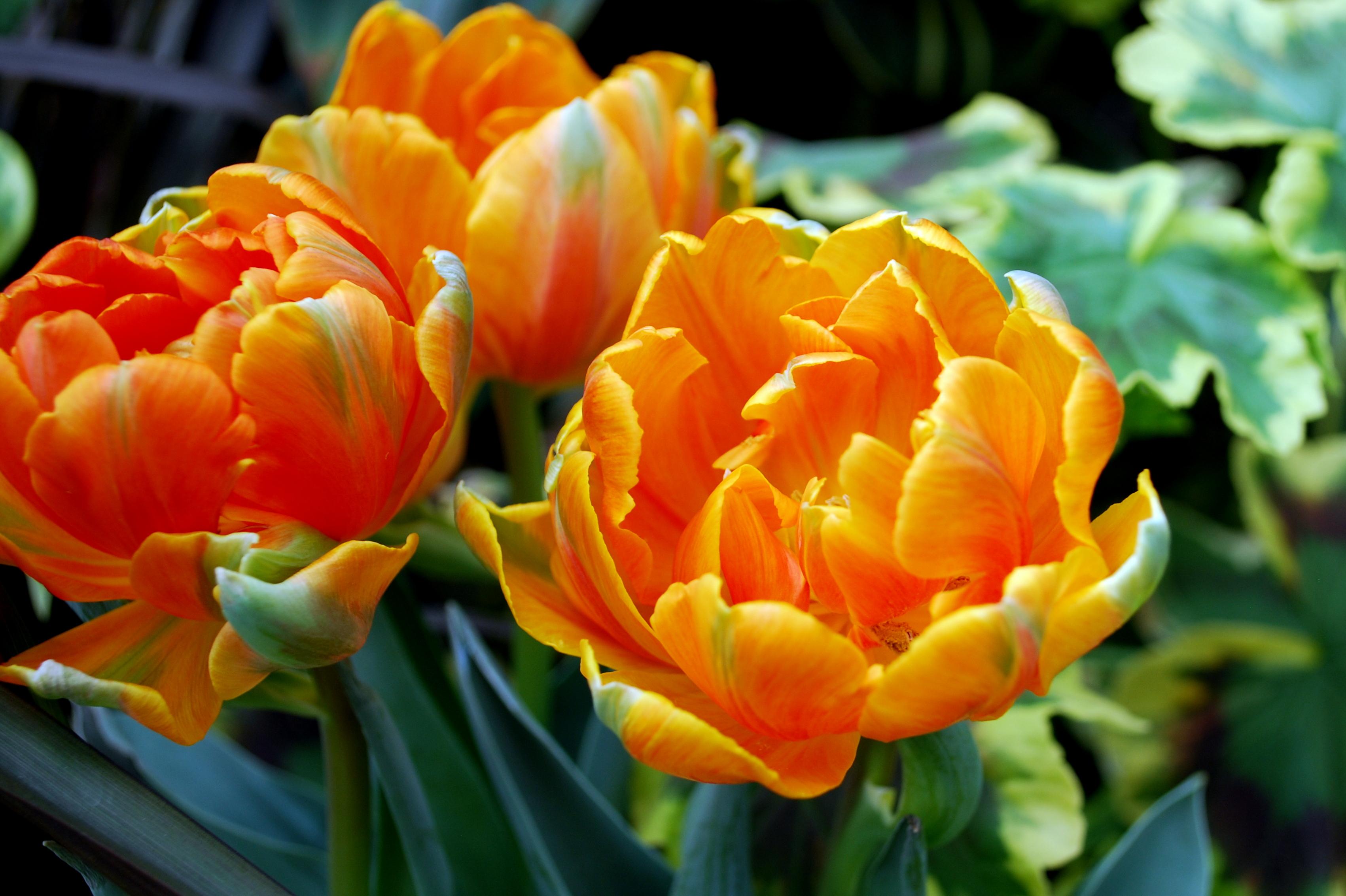 Biltmore Garden13