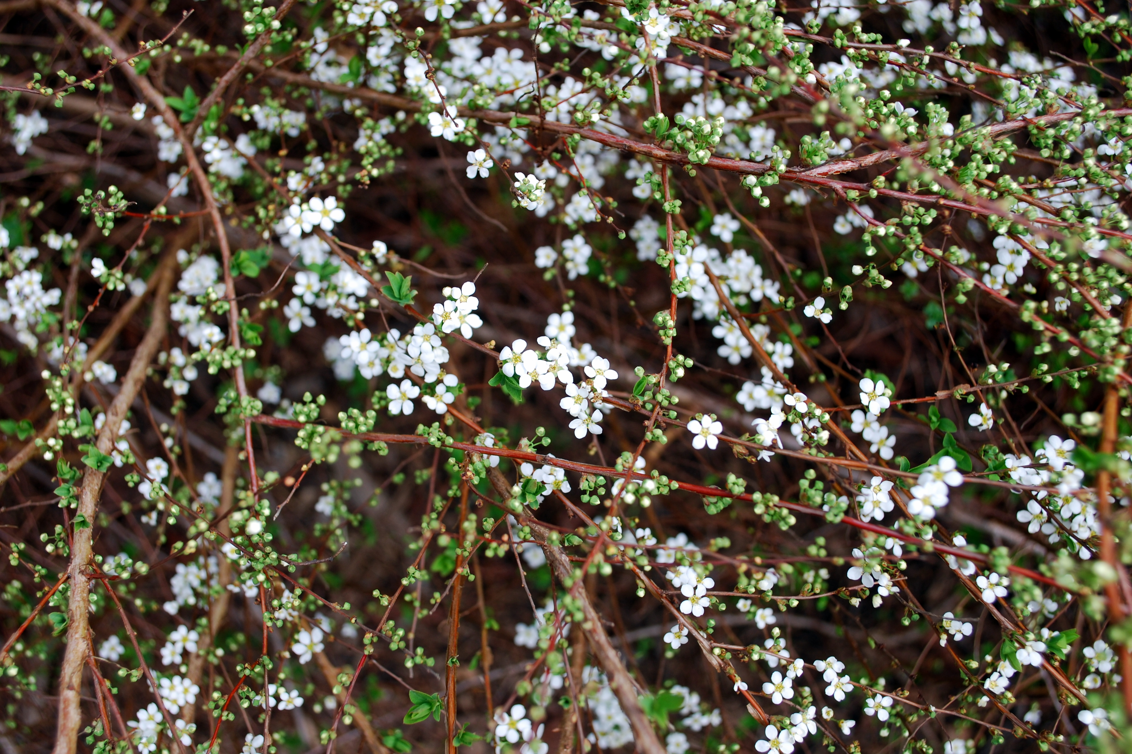 Biltmore Garden2