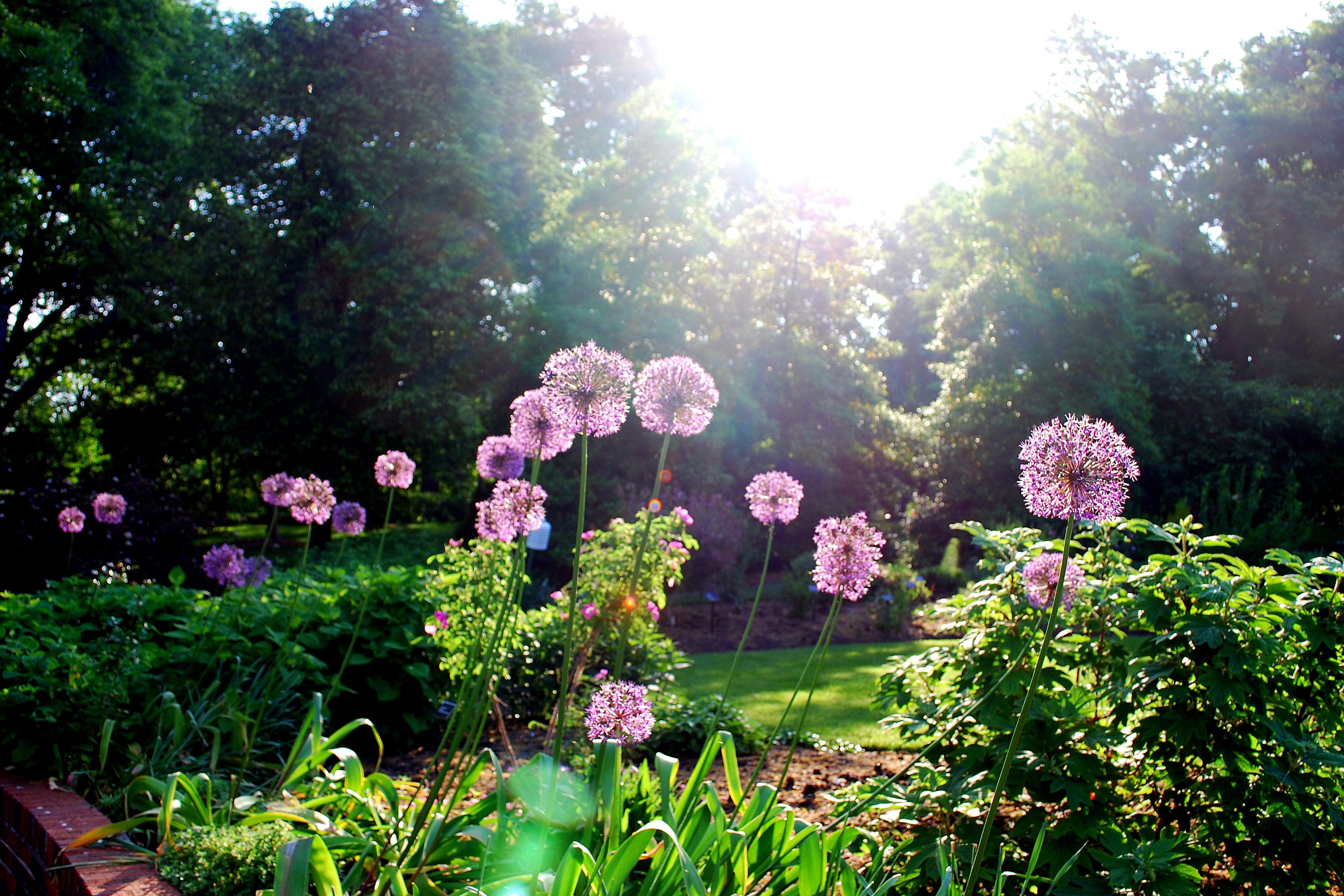 Wednesday Morning In The Garden