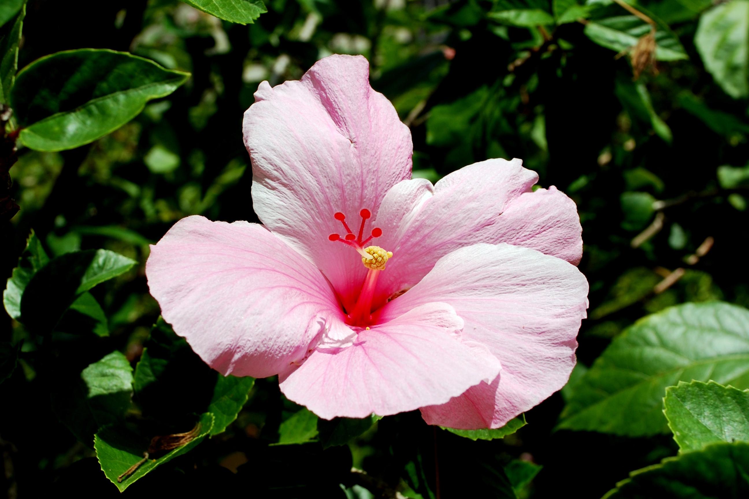 Sanibel Flowers 1