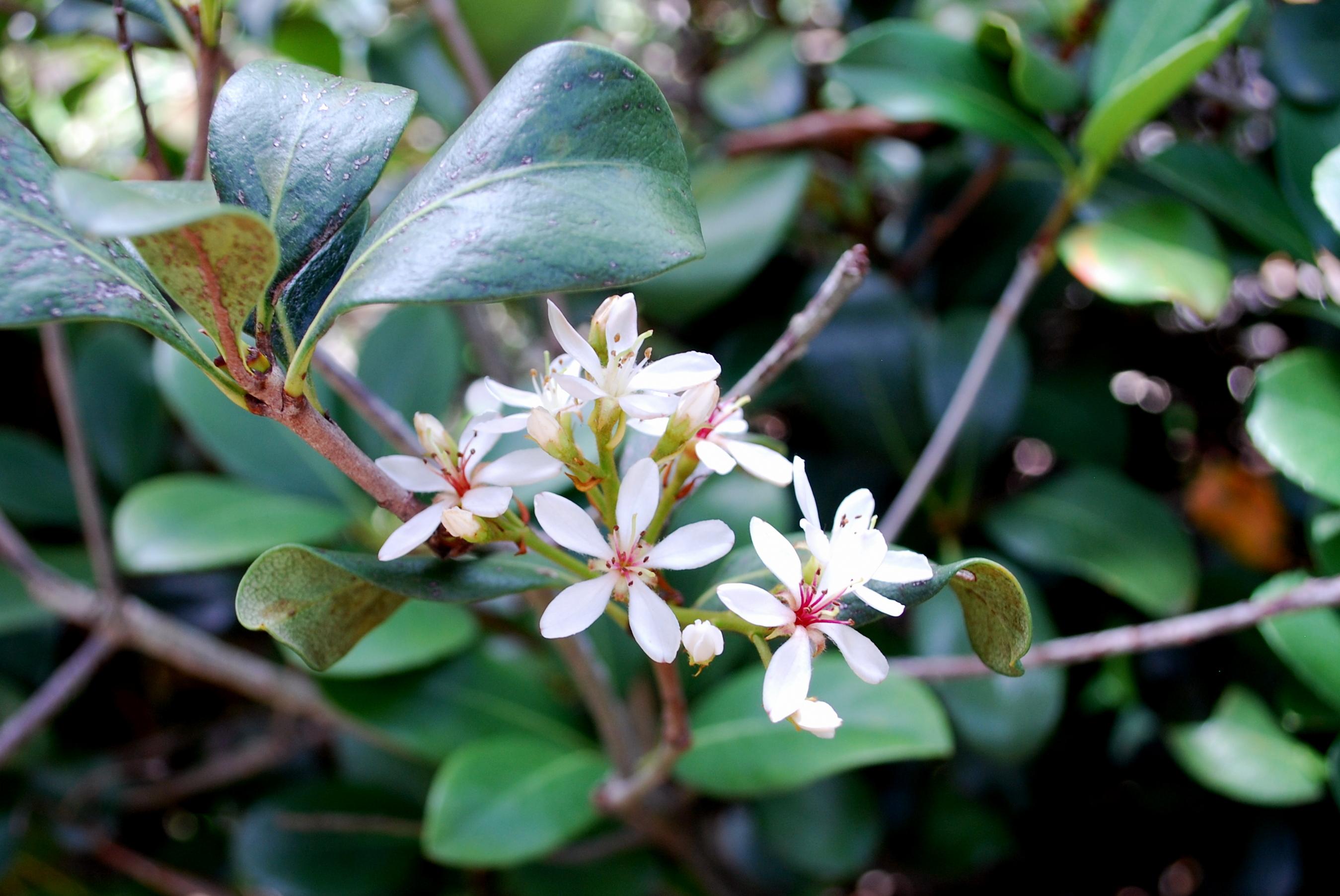 Sanibel Flowers 13