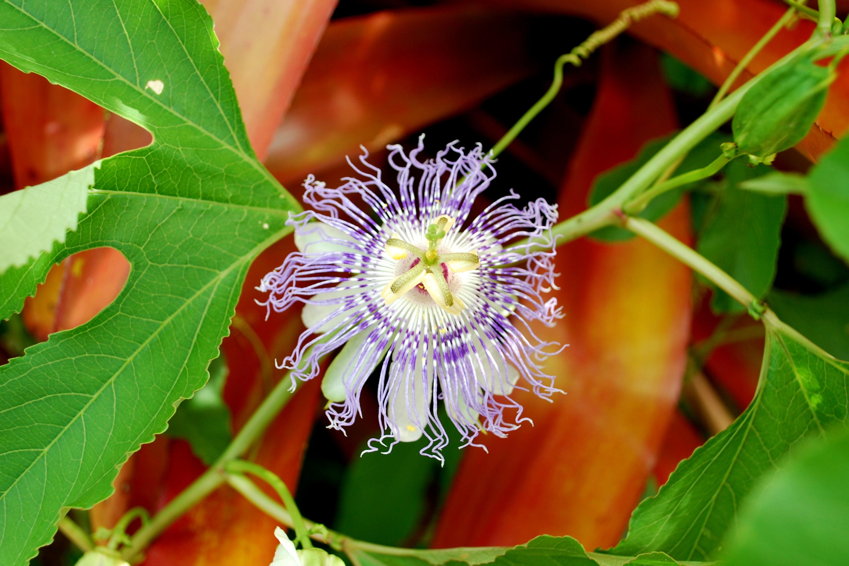 Sanibel Flowers 14