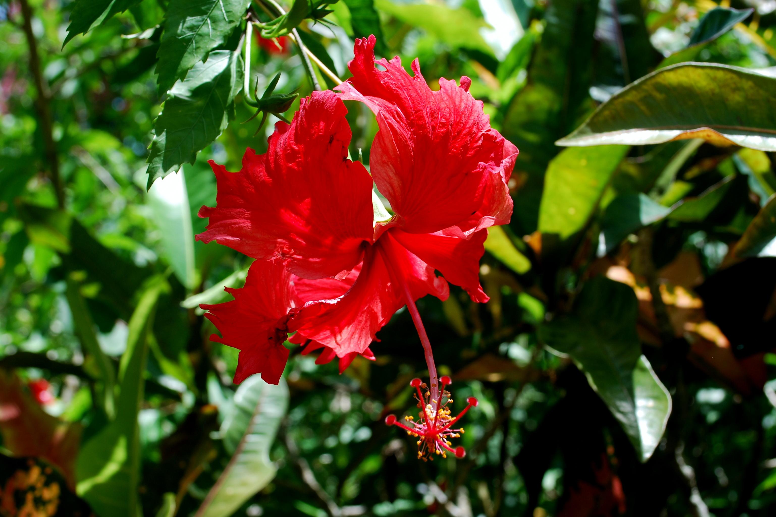 Sanibel Flowers 17