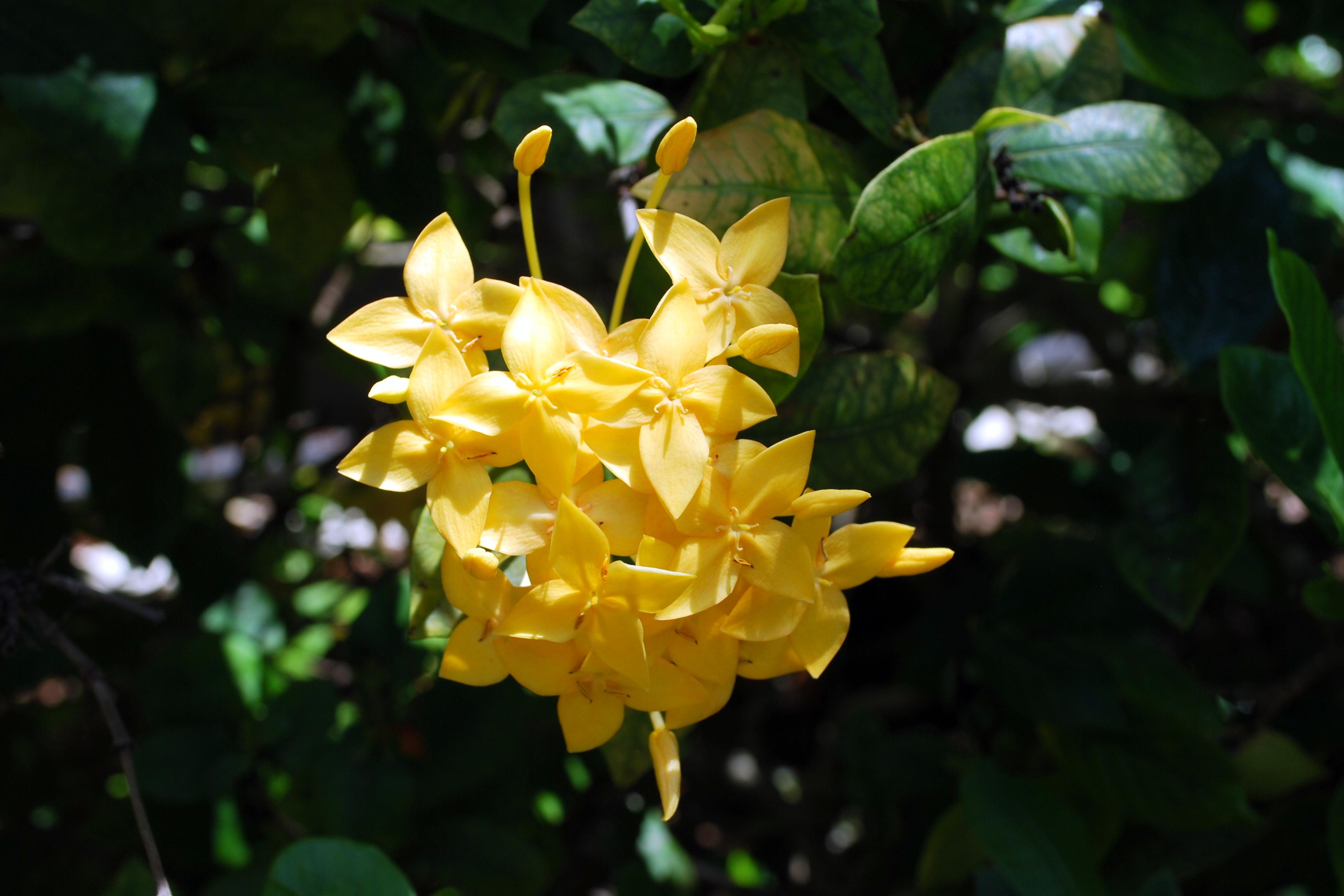 Sanibel Flowers 18