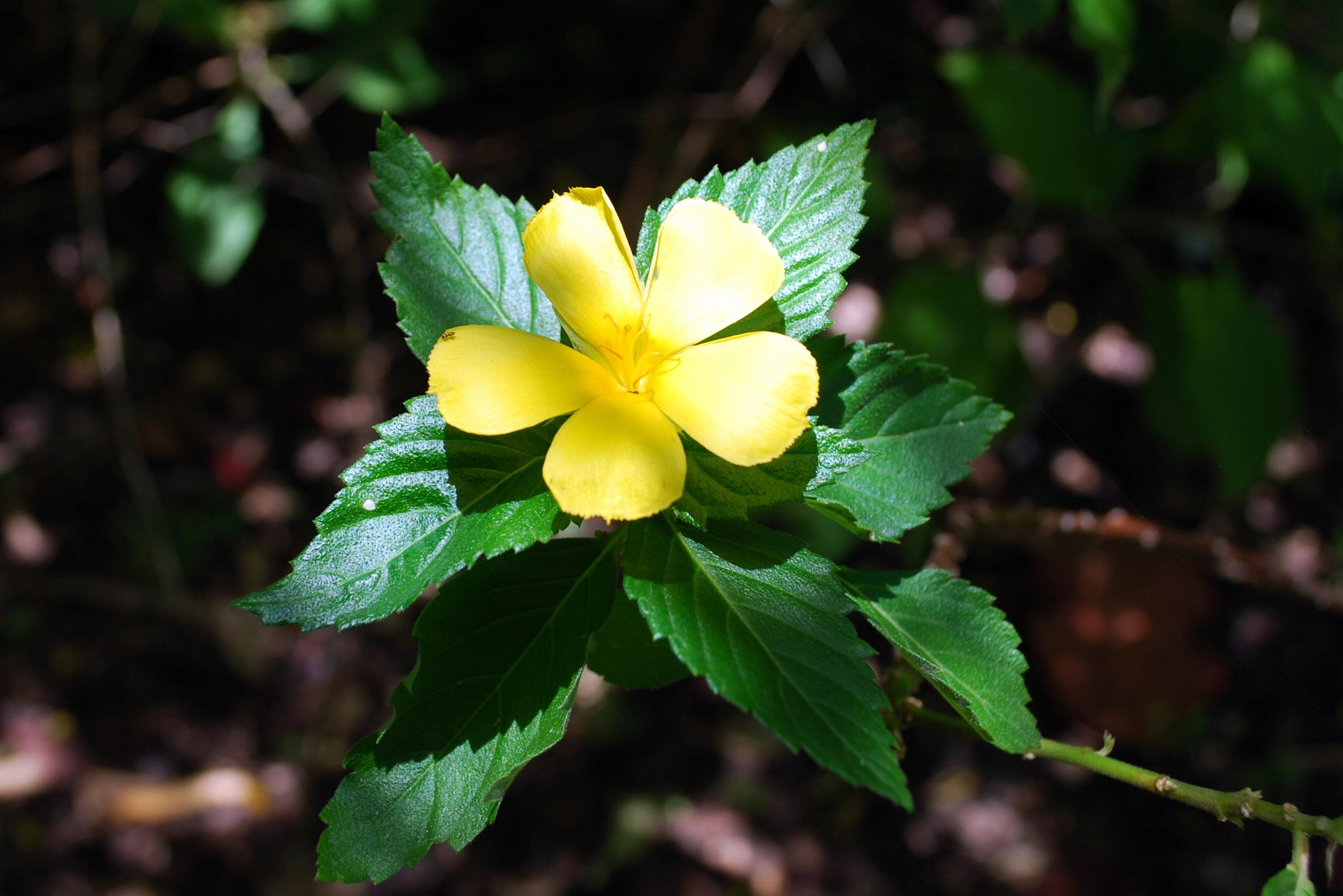 Sanibel Flowers 20