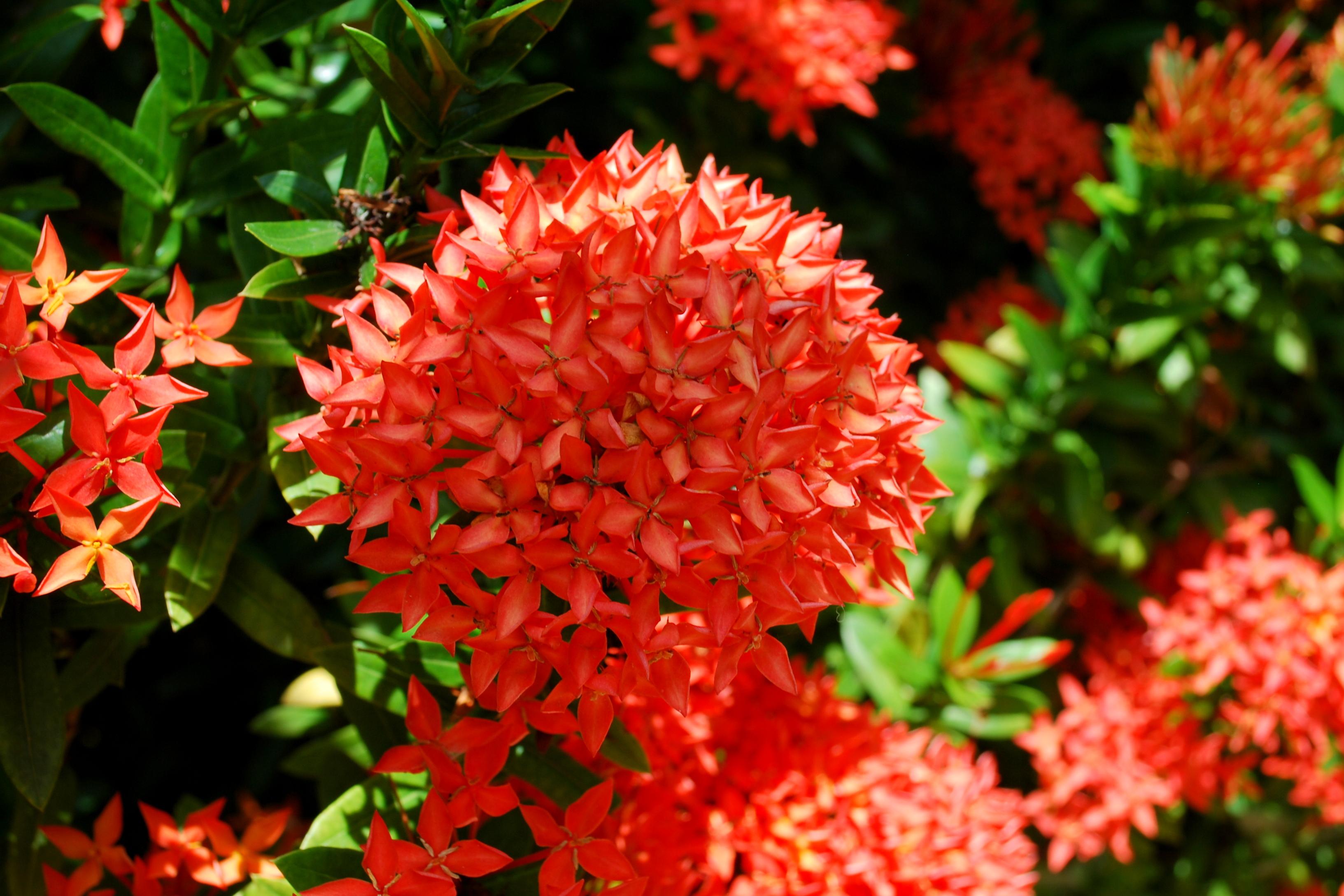 Sanibel Flowers 22