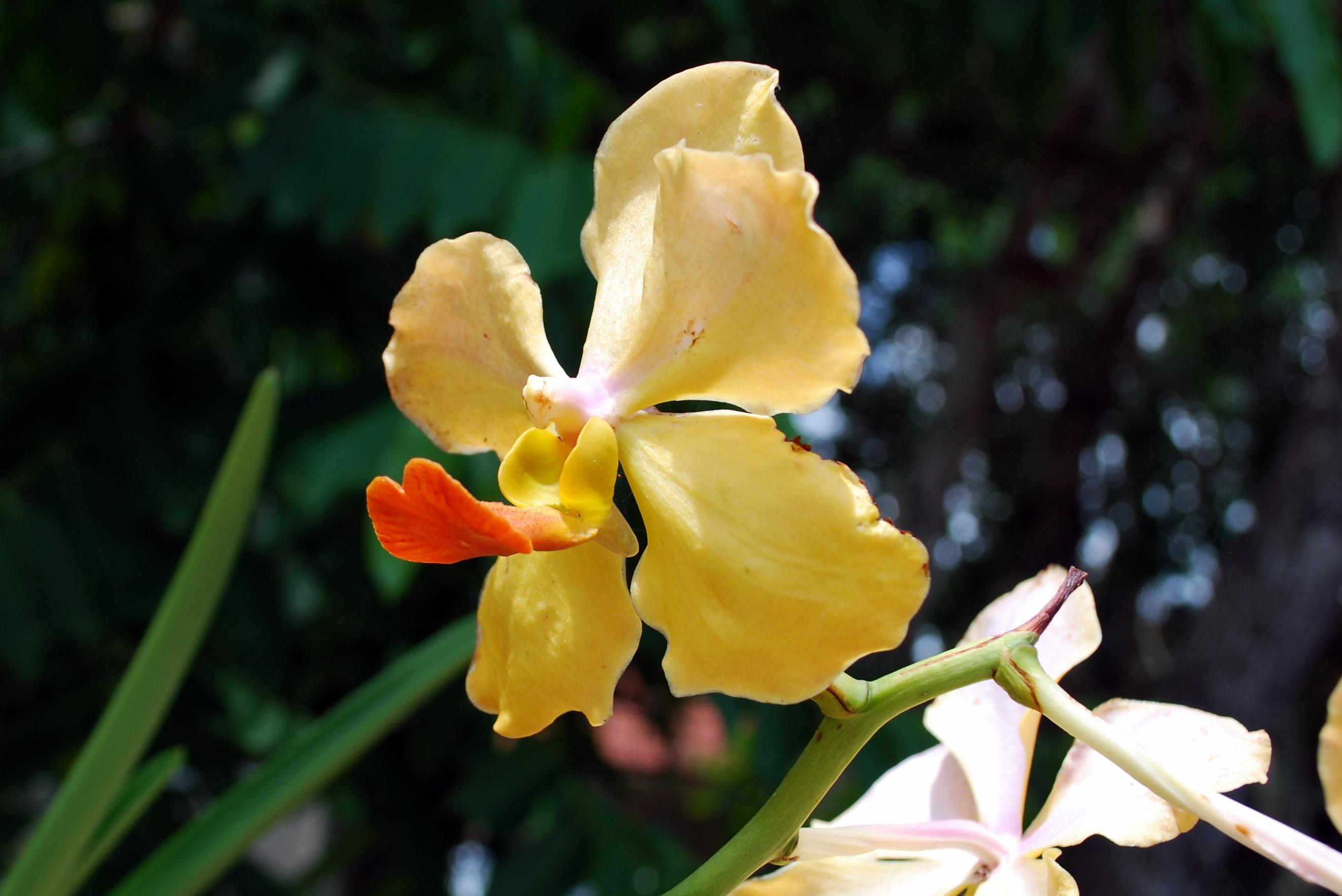 Sanibel Flowers 6