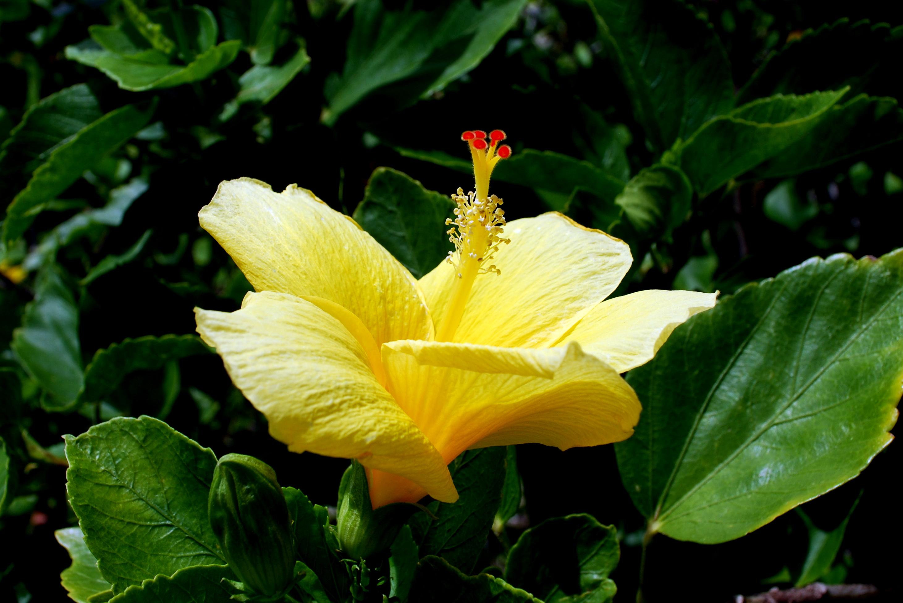 Sanibel Flowers 9