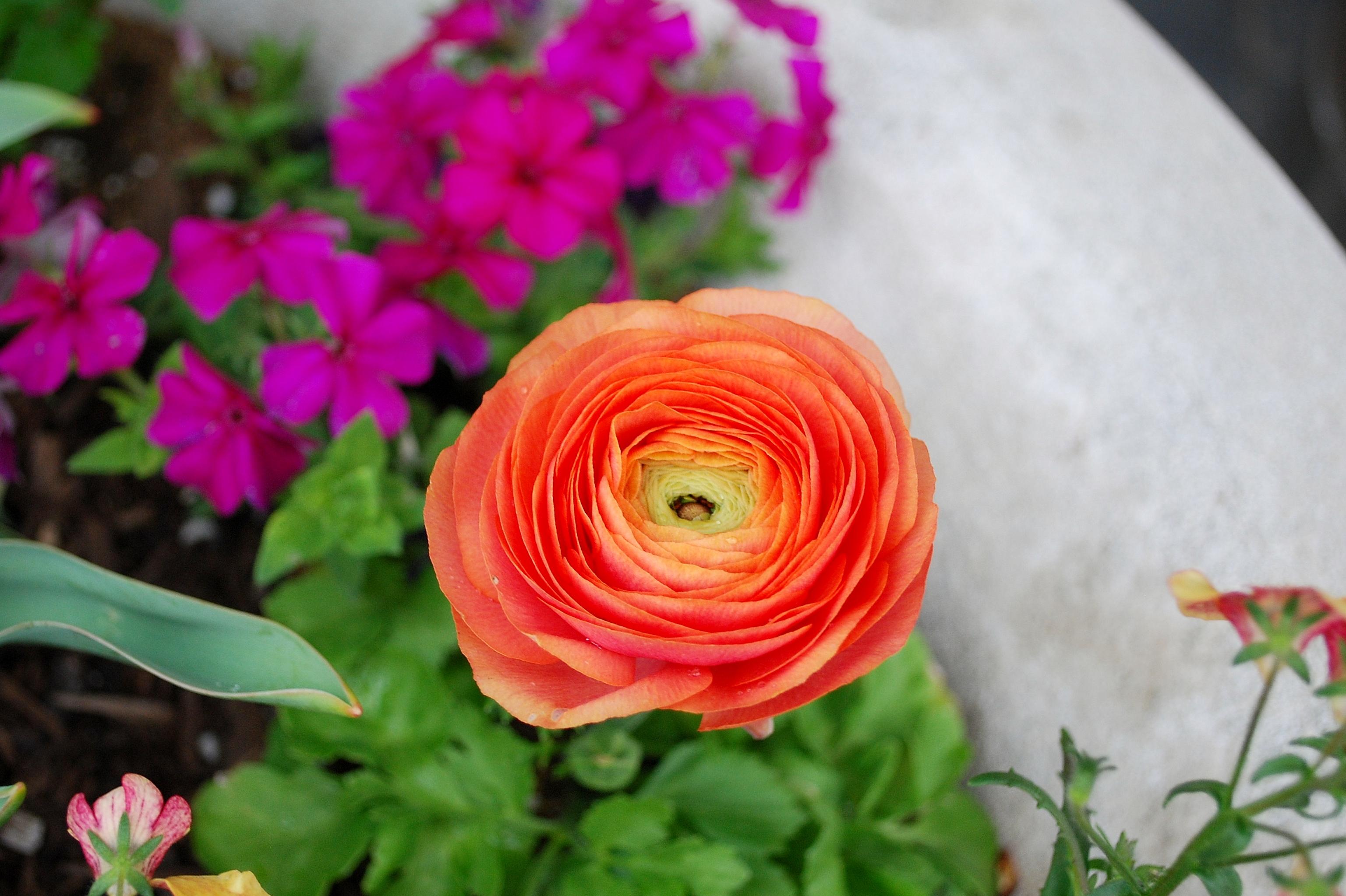 160406_Garden (9)