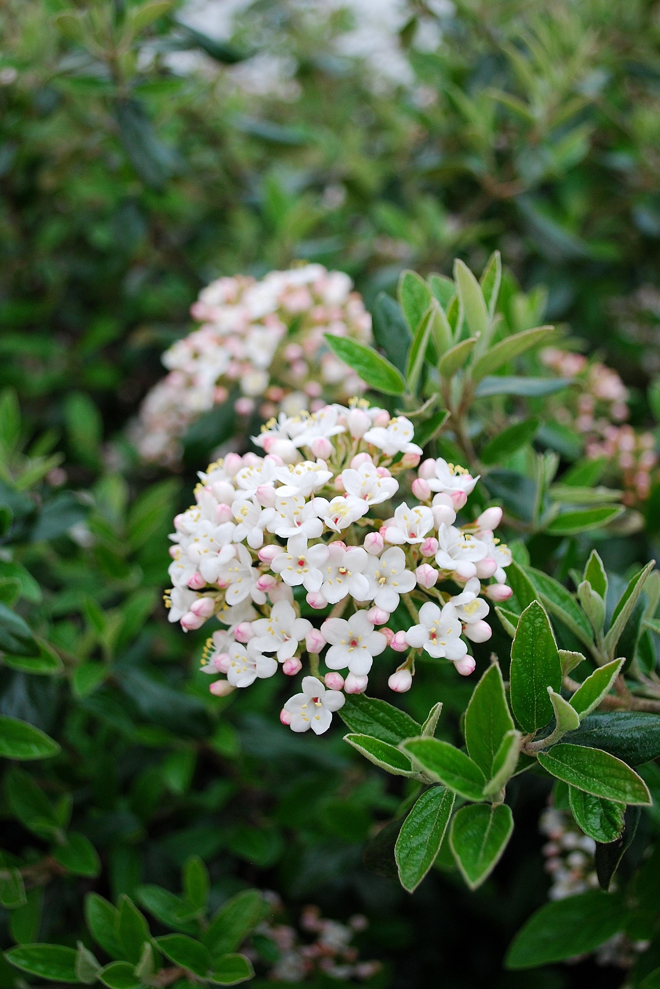 160406_Garden