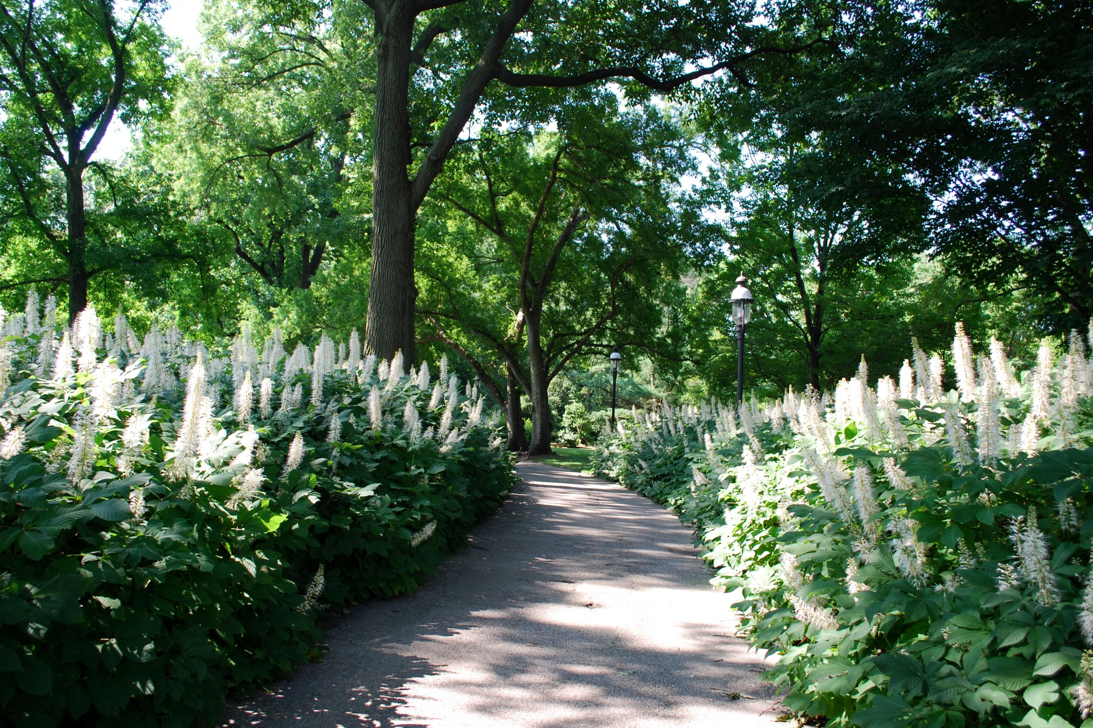 Garden 28