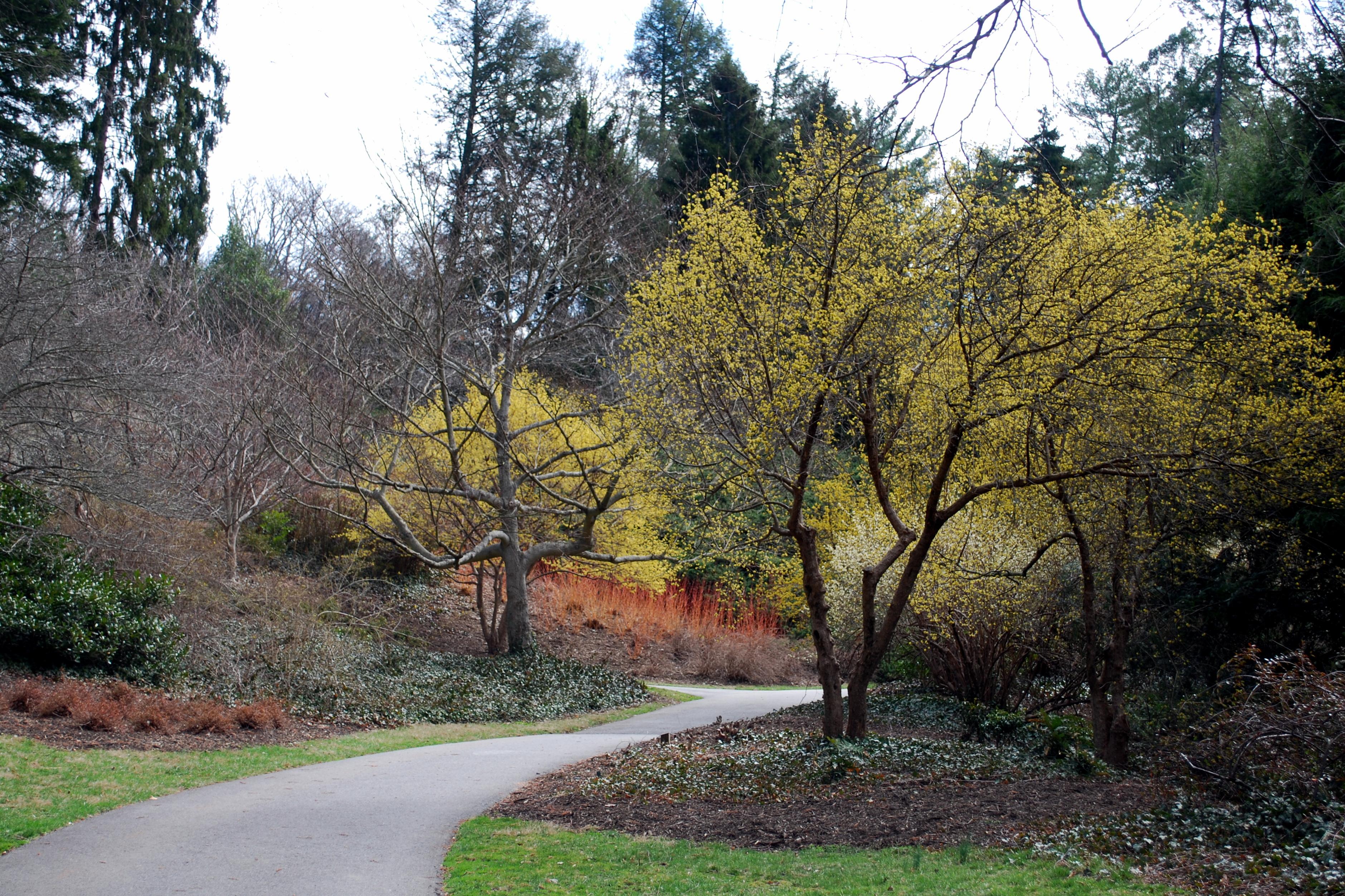 Biltmore Garden5