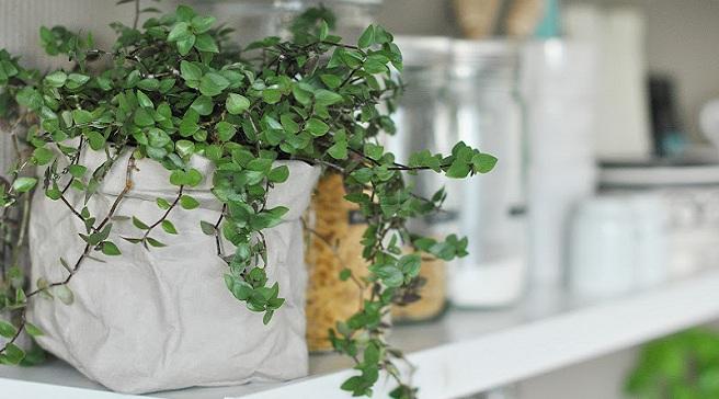 Uashmama-bolsas-de-papel-para-tus-plantas1
