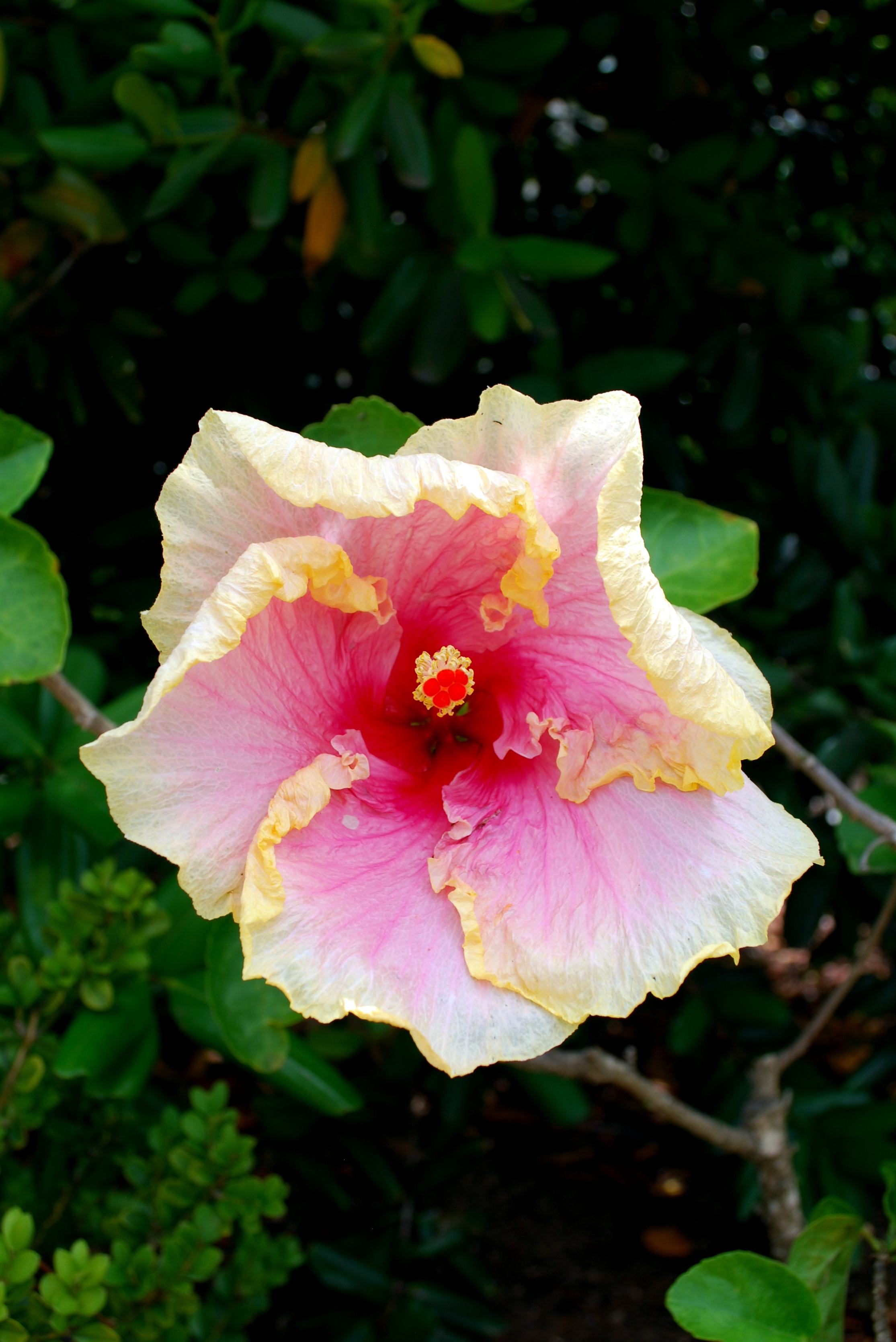 Sanibel Flowers 10