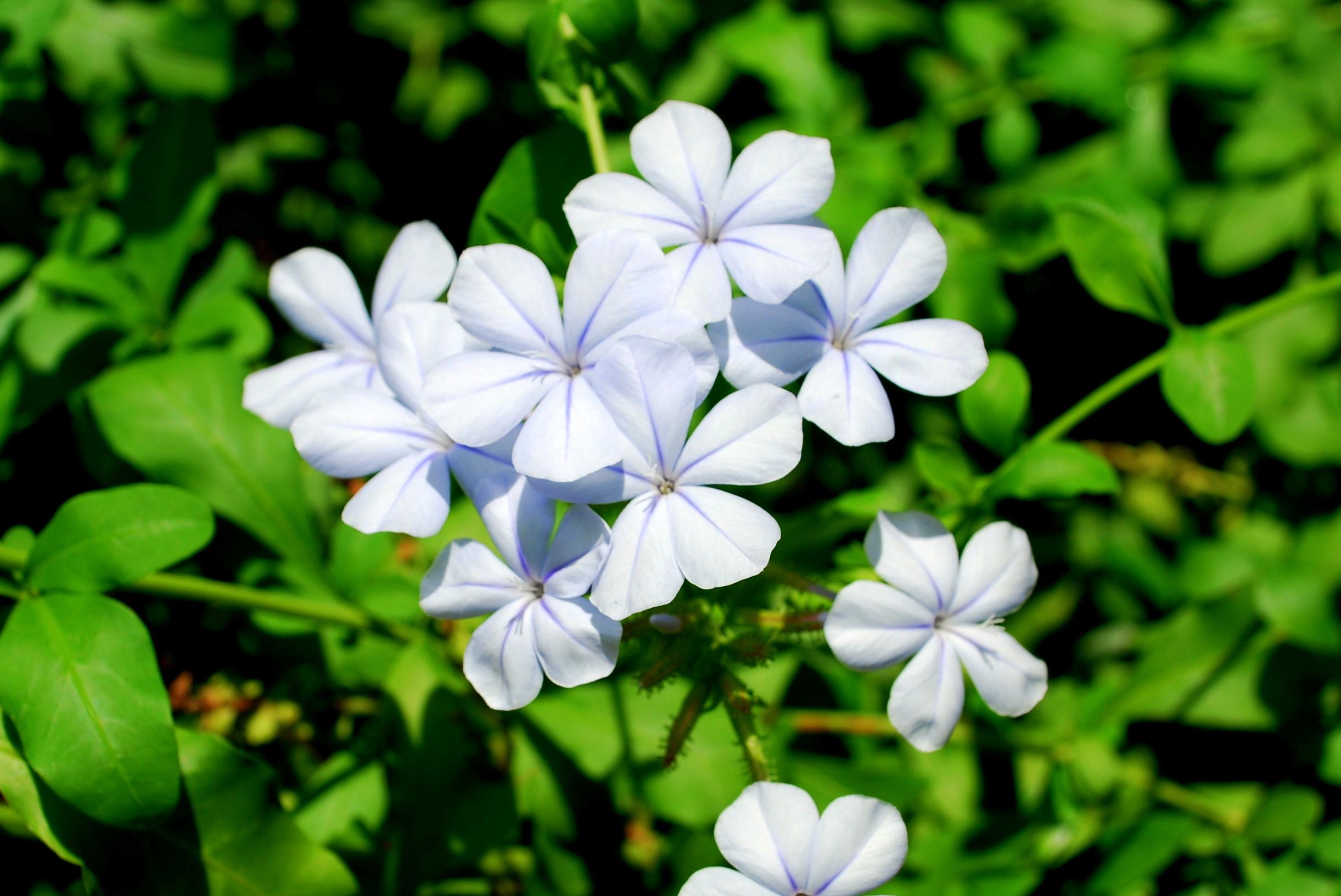 Sanibel Flowers 21