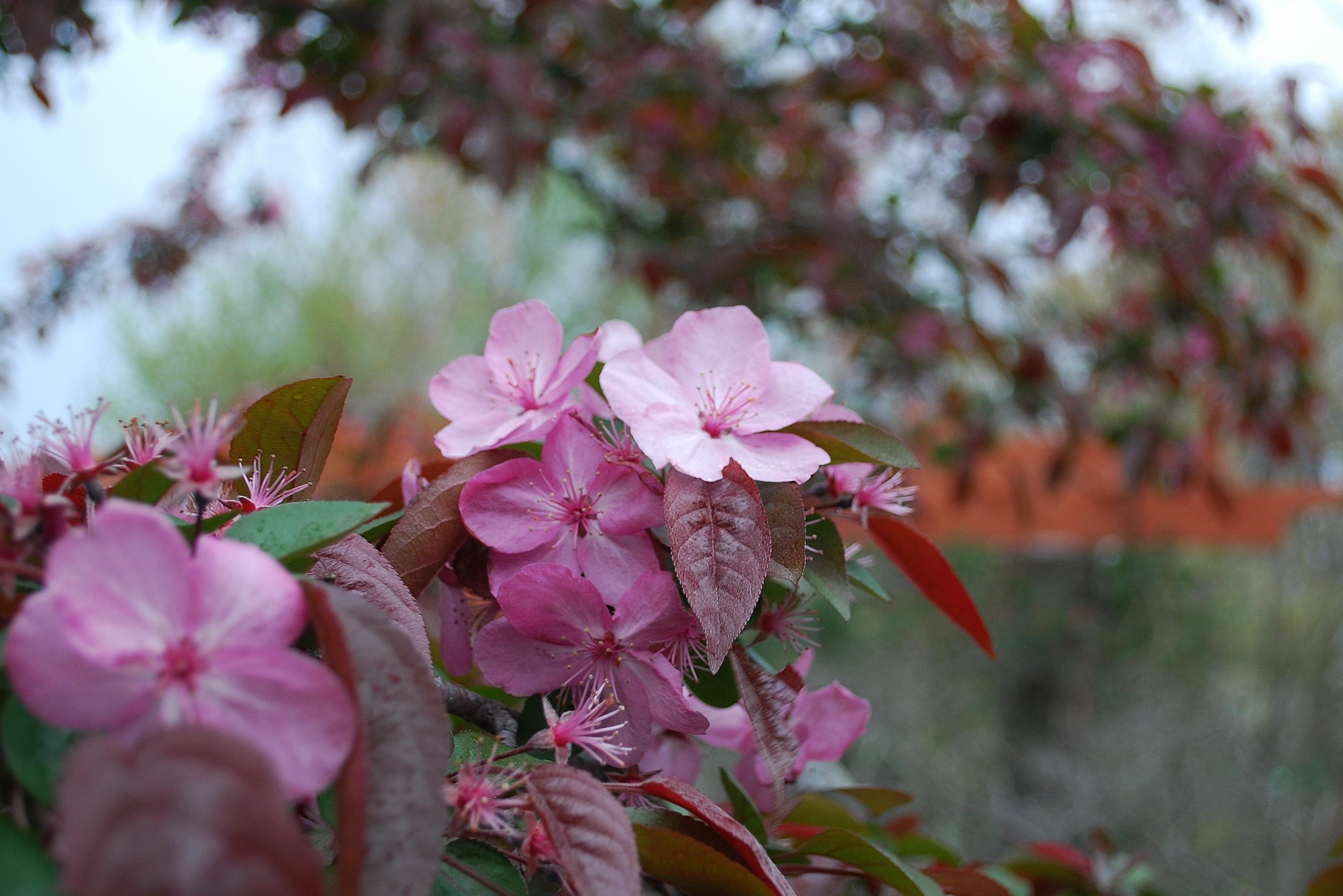 160406_Garden (11)