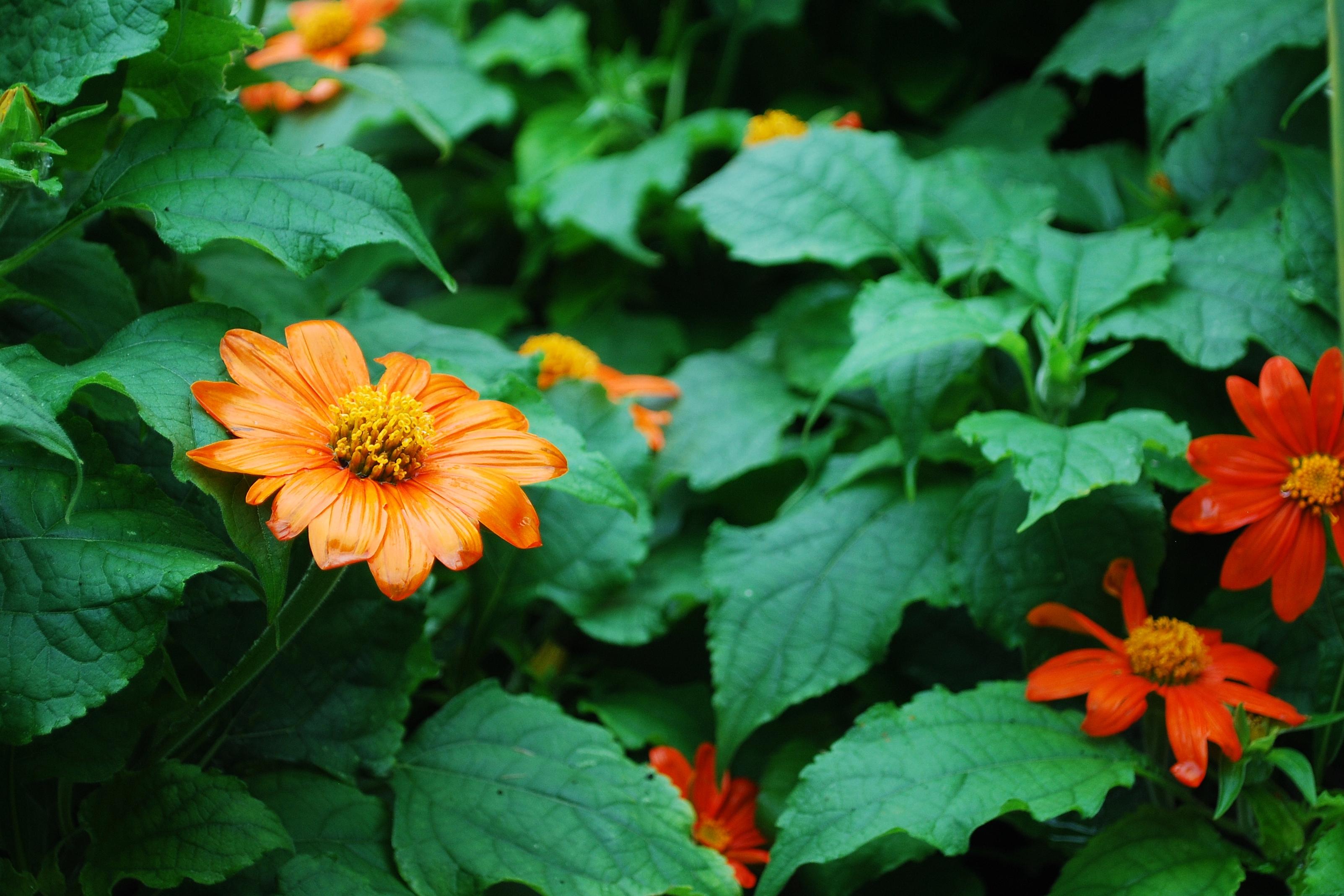 Garden 13
