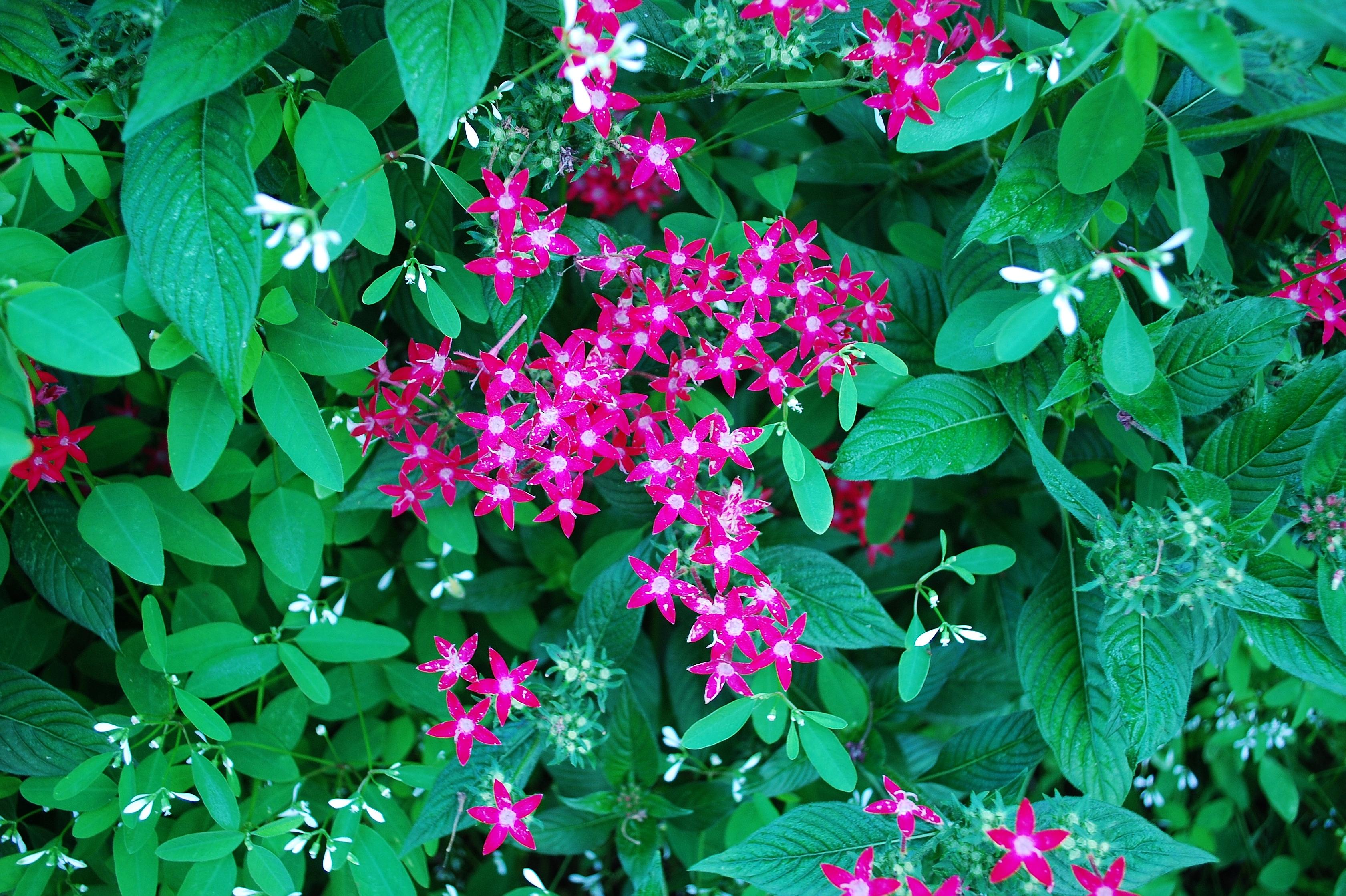 garden-8