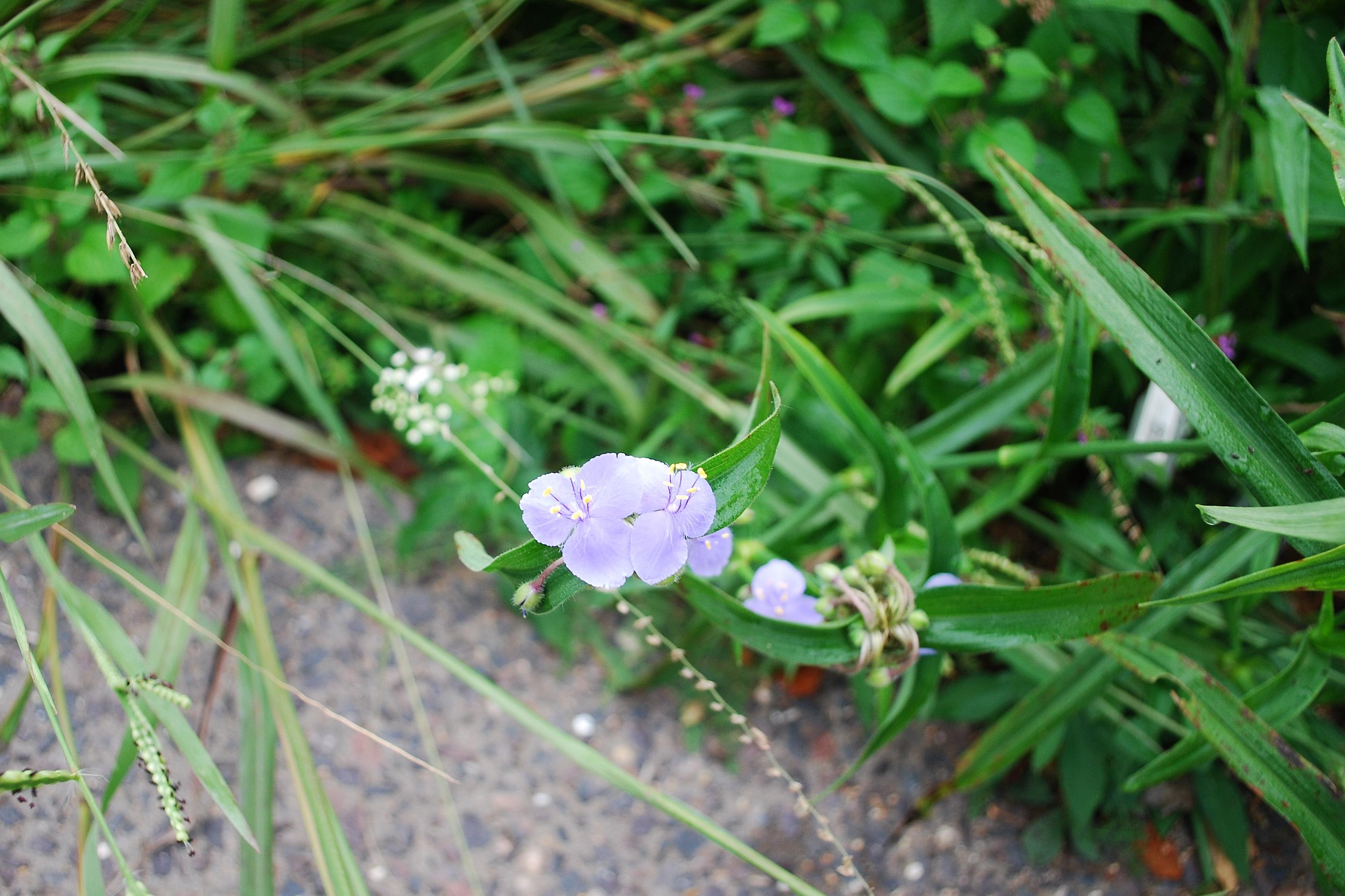 garden-18