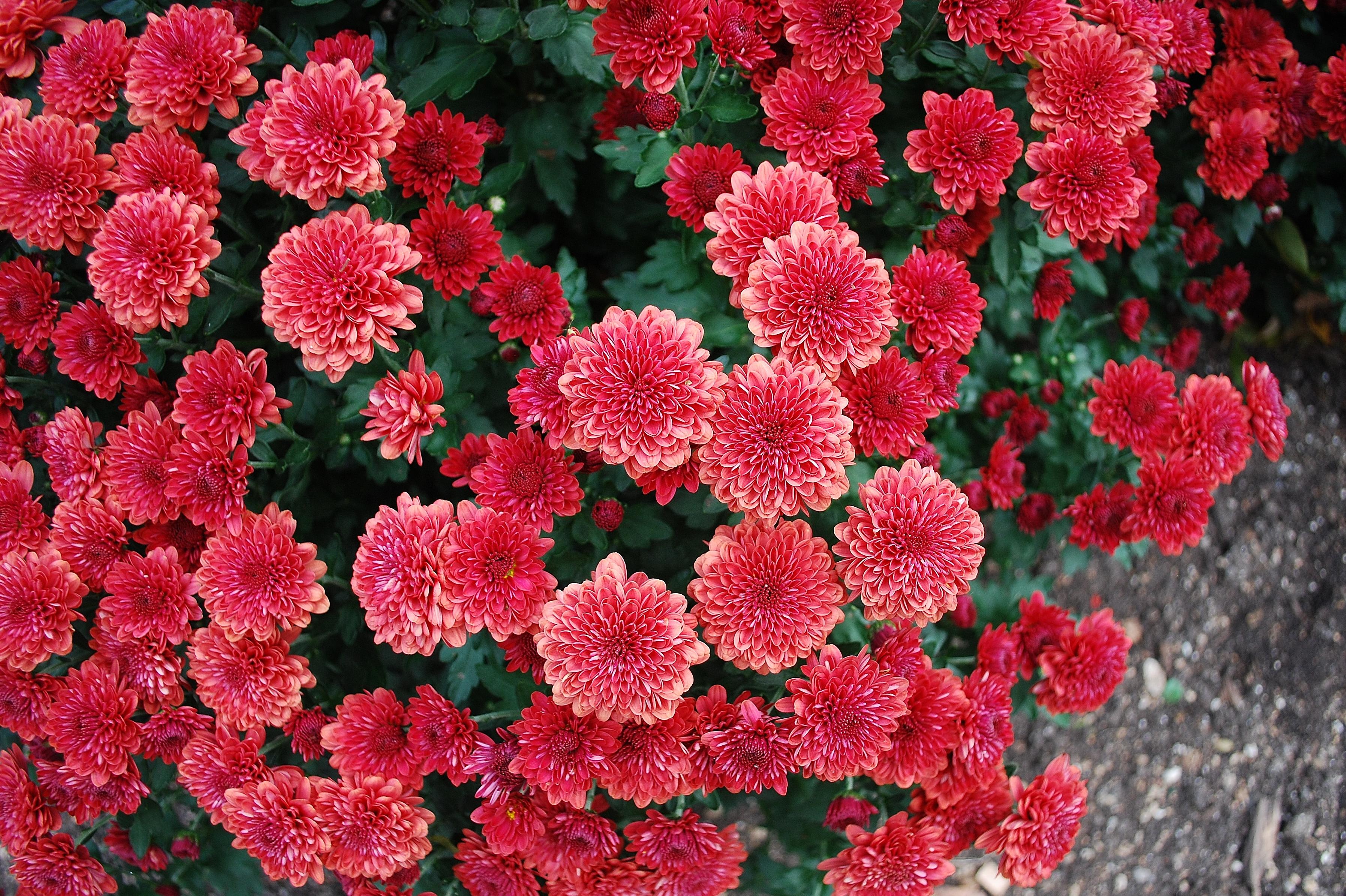garden-7